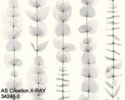 AS_Creations_X-RAY_34246-2_k.jpg